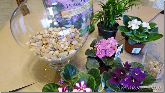 Apothecary Jars 3
