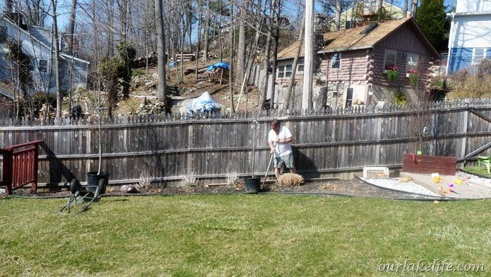 Hornbeam Planting