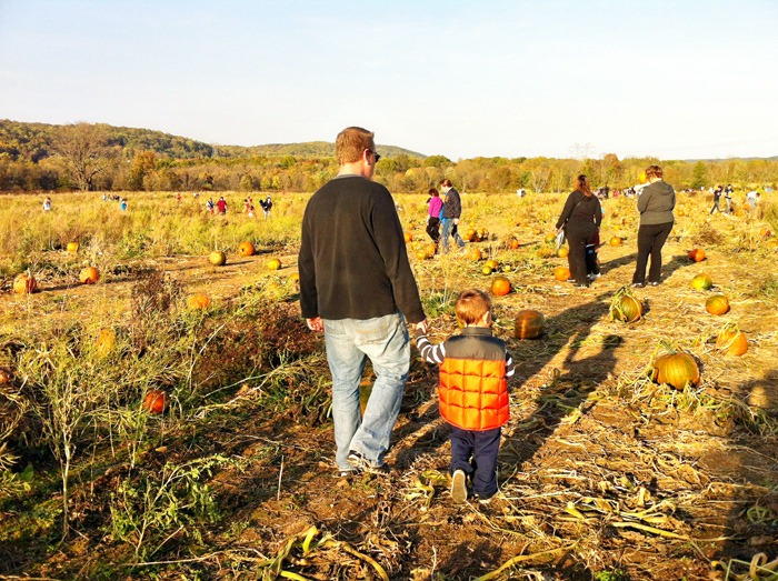 Pumpkin Picking 2012-9