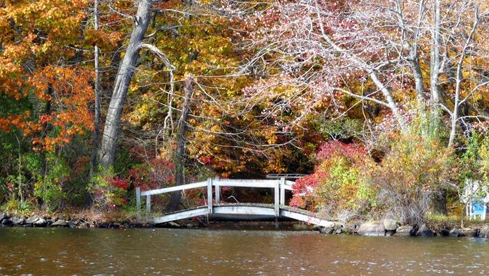 Fall Foliage 6
