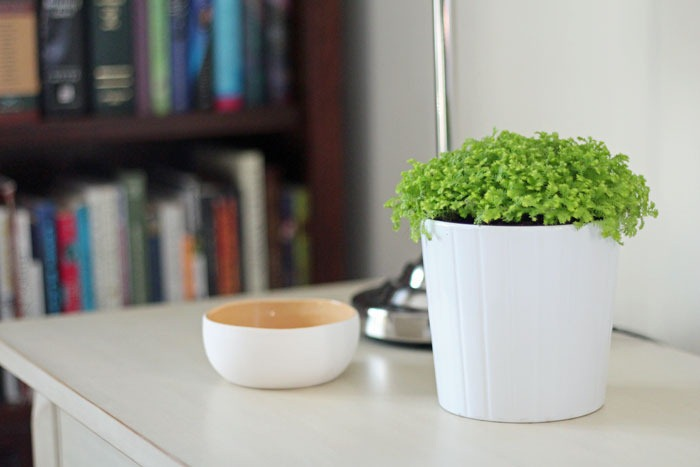 Ikea Fern and White Pot